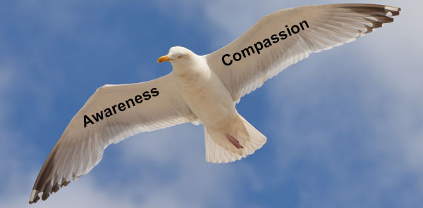 awareness and compassion